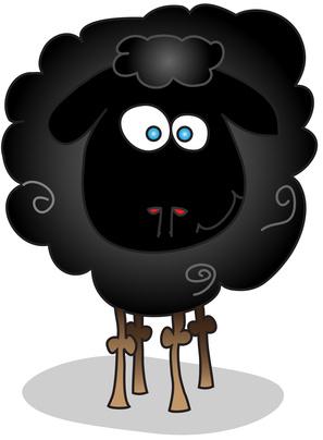 black sheep isolated